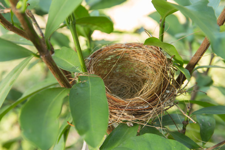 An empty bird nest with tree branches Stock fotó