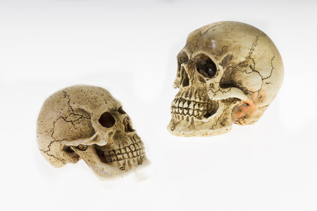 two heads: Human skull two heads turned to look each other, on a white background.