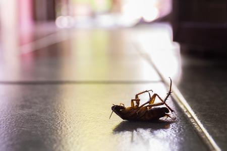 Het silhouet van dode kakkerlakken in het huis. Stockfoto