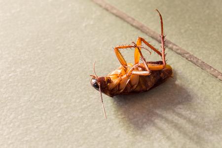 revolting: Dead cockroaches on floor. Stock Photo
