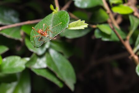 red ant on leaf background .