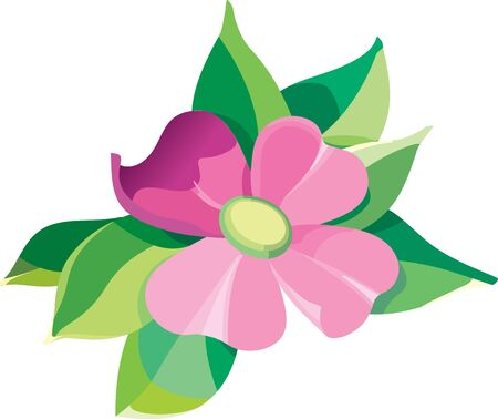 daisy pink: Violet flower with leaves editable vector illustration Illustration
