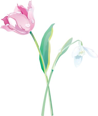 Spring flowers on a white background Illustration