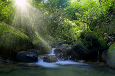 Forests stream