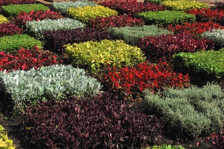 a close view of a geometric garden with many colors photo
