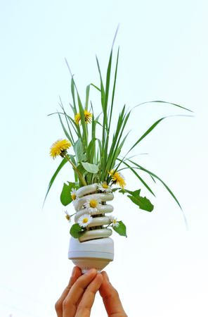 ecologic: ecologic light bulb with green plants and flowers Stock Photo