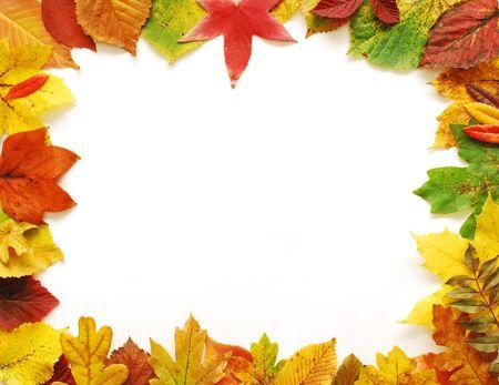 秋の葉のフレーム 写真素材