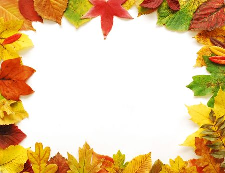 fall leaves on white: Autumn Leaves Frame Stock Photo