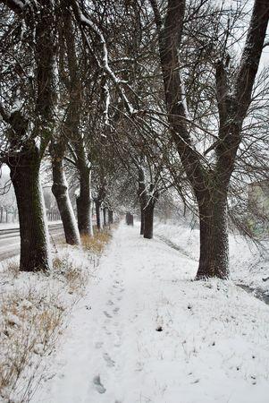 Winter Scene Stock Photo - 6112192