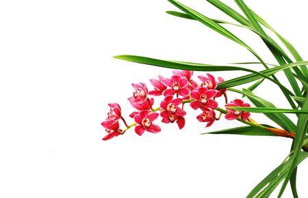 pink fuchsia beautiful orchid isolated on white background photo