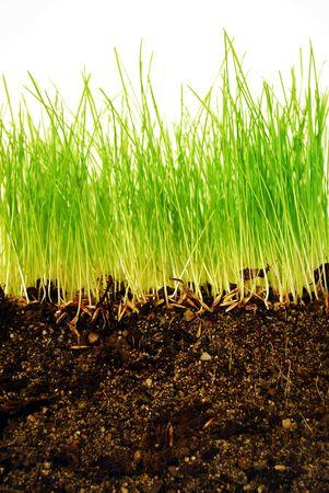 クローズ アップで地球にルーツを持つ成長が著しい草