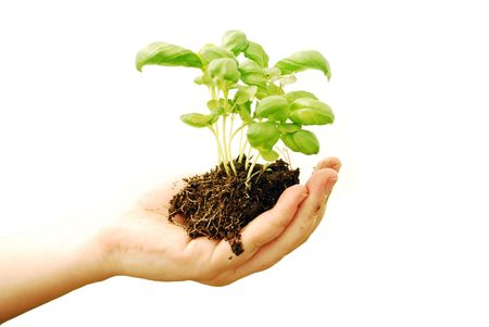 isolated on white woman's hand keeping soil and plant Foto de archivo