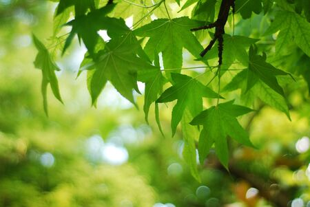 Nature background with leaves on tree shallow depth of field