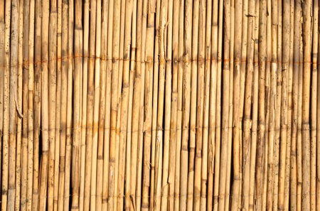 Japanese bamboo texture good for background photo