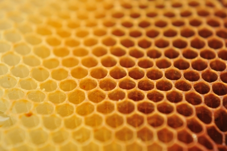 comb: close view of bee wax clay good for background