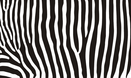very big size computer generated zebra texture photo