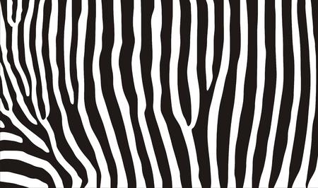 very big size computer generated zebra texture Banco de Imagens - 11222528