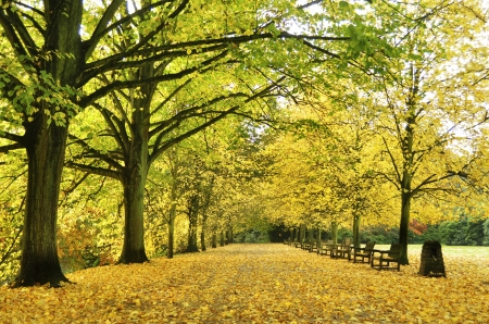 Beautiful autumn yellow lane in the forest good for wallpaper  photo