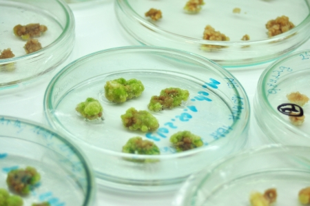 in vitro: little plants in vitro genetic engineering laboratory experiment