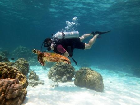 亀の近くの水の表面の間若い男スキューバ ダイバー