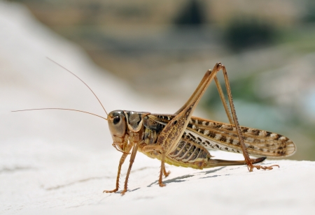 close detail of a grasshopper macro image with natural background photo