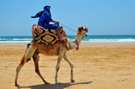 camello: Marruecos berber montando camellos en la playa del océano atlántico Foto de archivo