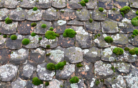 vegetation: Roof tiles moss and lichens vegetation texture background Stock Photo