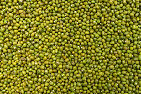 vigna: mung green beans texture pattern food background