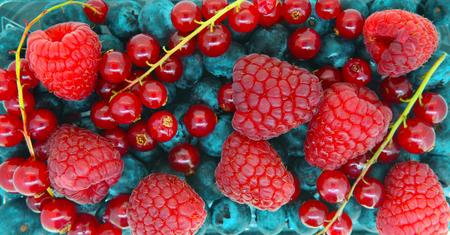 Various wild berries  nature fruits pattern