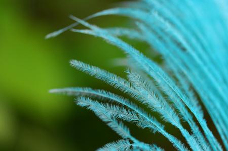 Blue plume macro bird feather close detail