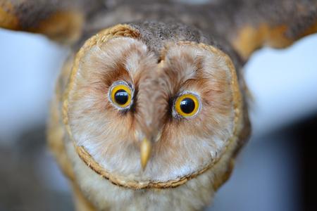 Bird owl face portrait detail
