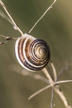 humid: snail Stock Photo