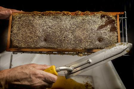 beekeeper: beekeeper removed beeswax from an honeycomb Stock Photo