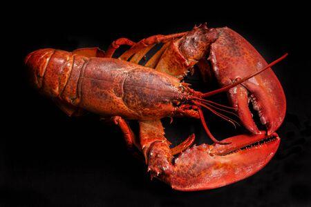 the freshness: freshness lobster on a black background