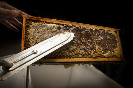 removed: beekeeper removed beeswax from an honeycomb Stock Photo