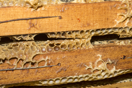 beeswax: honeycombs full of beeswax and honey
