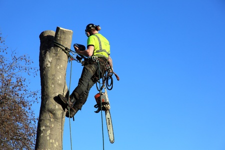timber cutting: London, United Kingdom, January 9, 2009 : A tree surgeon in a harness removing an unsafe tree with copy space Editorial