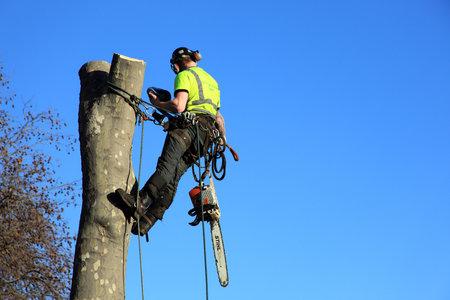 boom kappen: London, Verenigd Koninkrijk, 9 januari, 2009: een boom chirurg in een harnas verwijderen van een onveilige boom met kopiëren ruimte