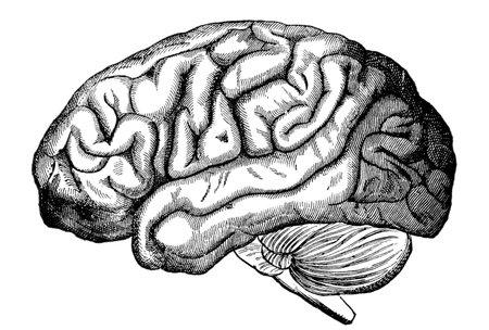 cerebro blanco y negro: Una ilustración grabado del cerebro humano, de un libro de Victorian de fecha 1880 que ya no está en derecho de autor