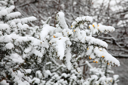 slush: Landscape of a heavy fall of snow on shrub and tree branches Stock Photo