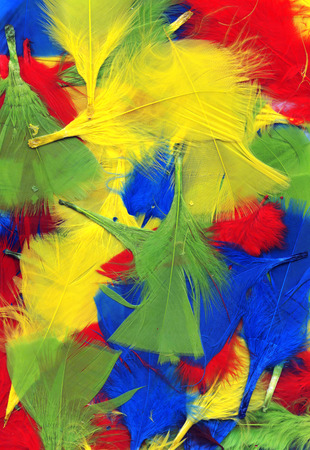bird feathers: Multi coloured fluffy and soft bird feathers abstract background