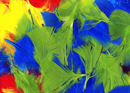 multi coloured: Multi coloured fluffy and soft bird feathers abstract background