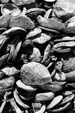 discarded: Used and discarded sea shell background from a beach coastline, black and white image Stock Photo