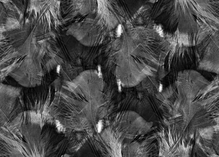 background kaleidoscope: Abstract black and white feather background pattern