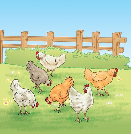 stockade: Chicken feeding in the farm