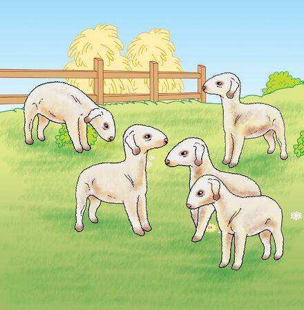 breastfeed: Lambs on The Farm Stock Photo