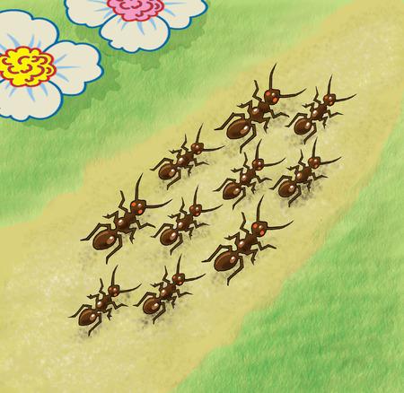 walking path: Ants walking along the path.
