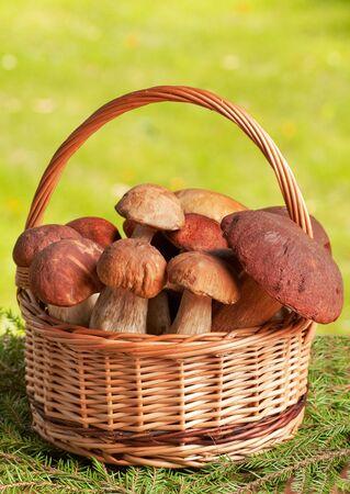 fungous: wooden basket full of huge mushrooms Stock Photo