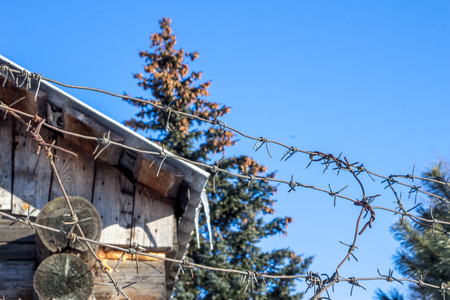 Unusual winter landscape in the russian village with a part of a wooden house, firewood, Christmas trees and barbed wire