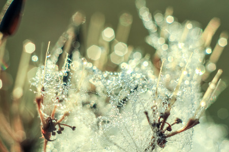 Close-up of abstract drops on a dry plant on a web with variable focus and blurred background in the rays of the rising sun